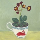 Auricula in a rabbit cup